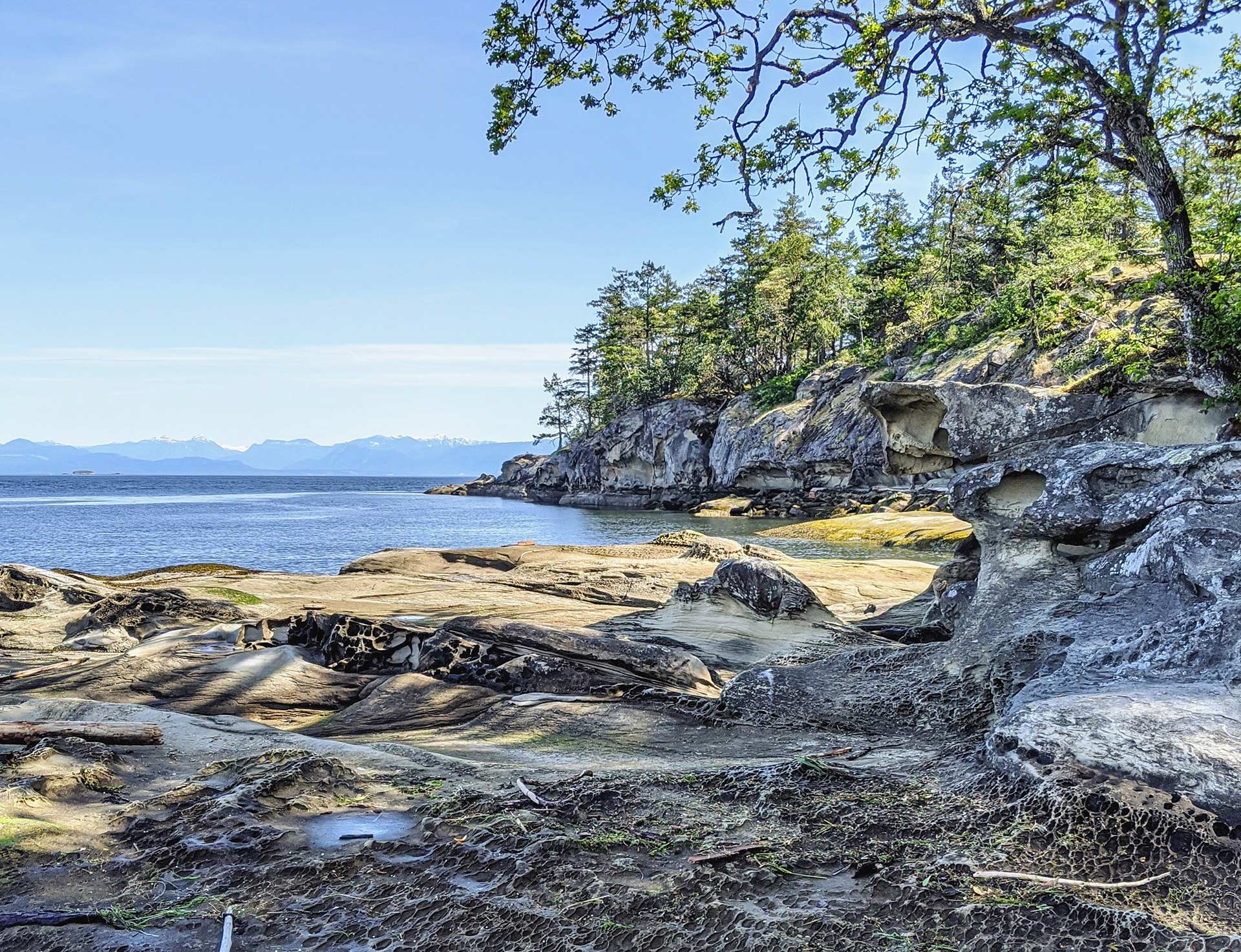 Picture of Pine Trees at the Beach Near our Vacation Rentals on Vancouver Island.